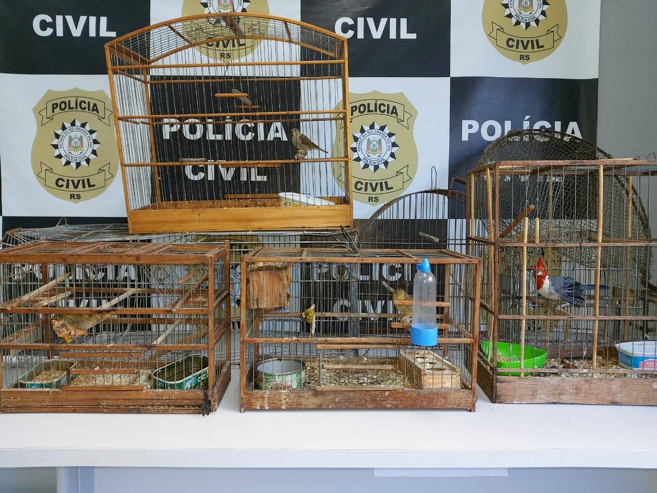 Polícia Civil apreende pássaros silvestres e detém homem por crime contra a fauna no BGV